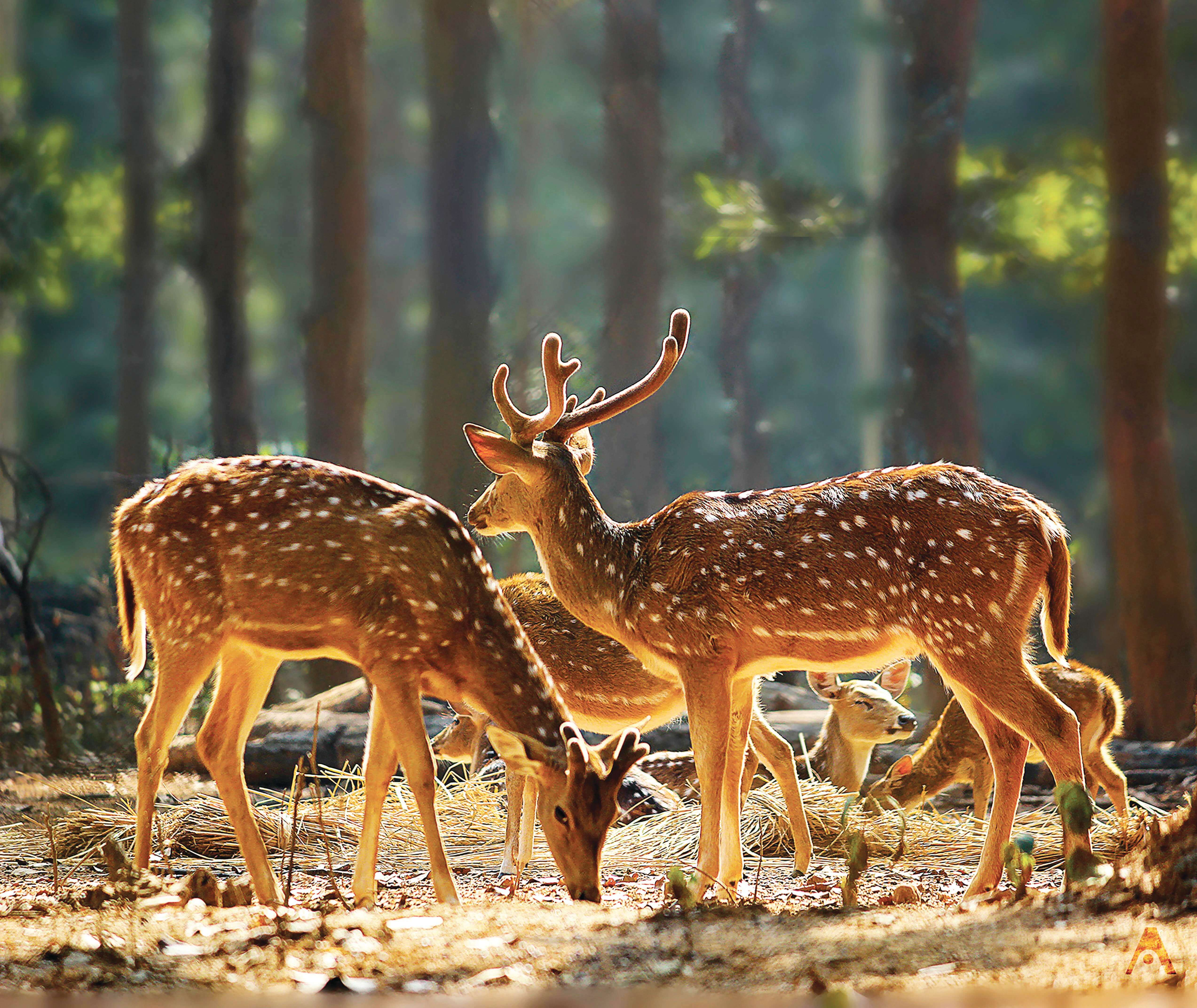 JHARKHAND – Rejuvenate your Verve Close to Nature