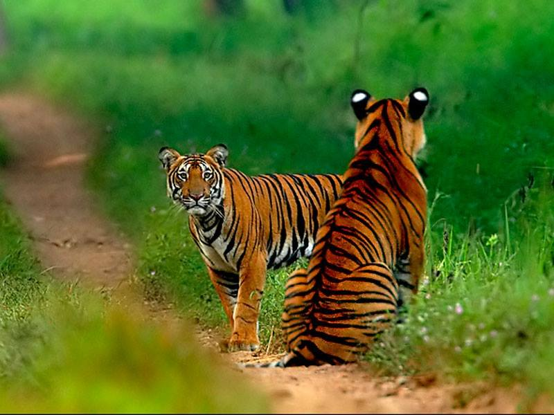 Teeming Wildlife of Telangana